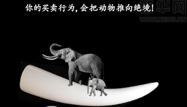你的買賣行為,會把動物推向絕境!