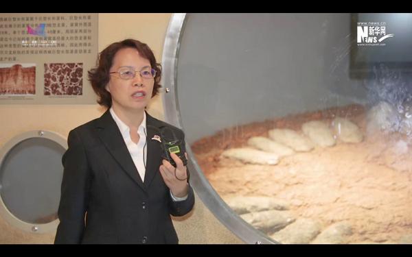 河南自然博物馆——探秘地球生态奇迹