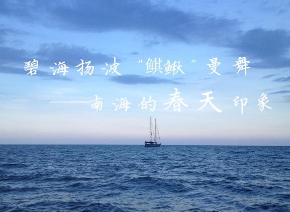 """碧海揚波 """"鲯鰍""""曼舞——南海的春天印象"""