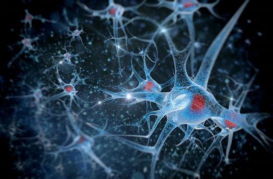 美科學家發現控制清醒程度的神經元