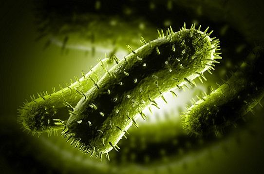 """我國學者揭示植物病毒傳播的""""秘密通道"""""""