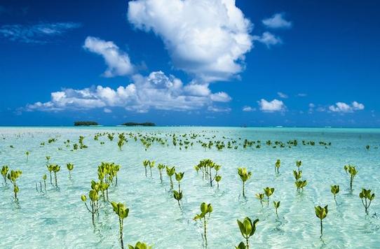 最大生物爆發可能由海平面上升導致