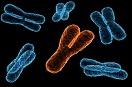 科學家助染色體異常不育小鼠當爸爸