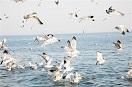 過度捕撈和氣候變化讓部分海鳥瀕臨滅絕