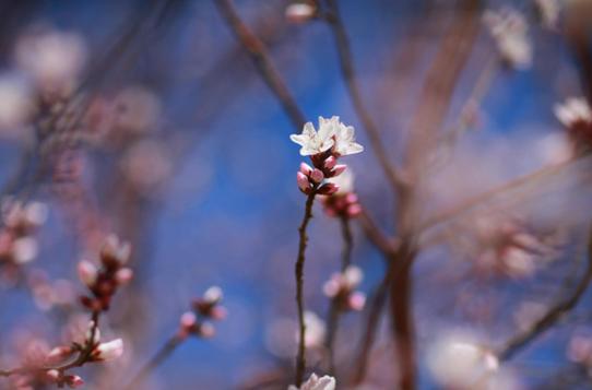 陽春三月 那些花兒如約綻放