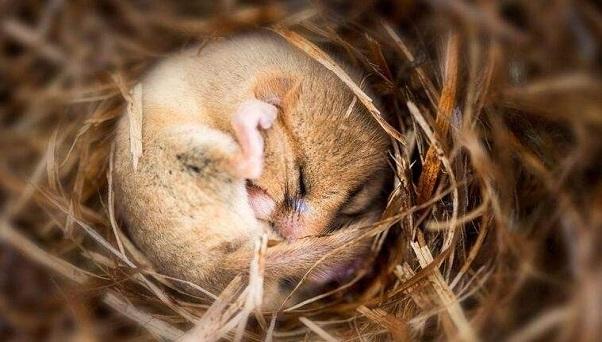 動物冬眠會不會餓?