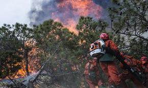 森林火灾小常识