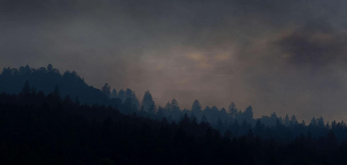 一点星星火,能毁万亩林