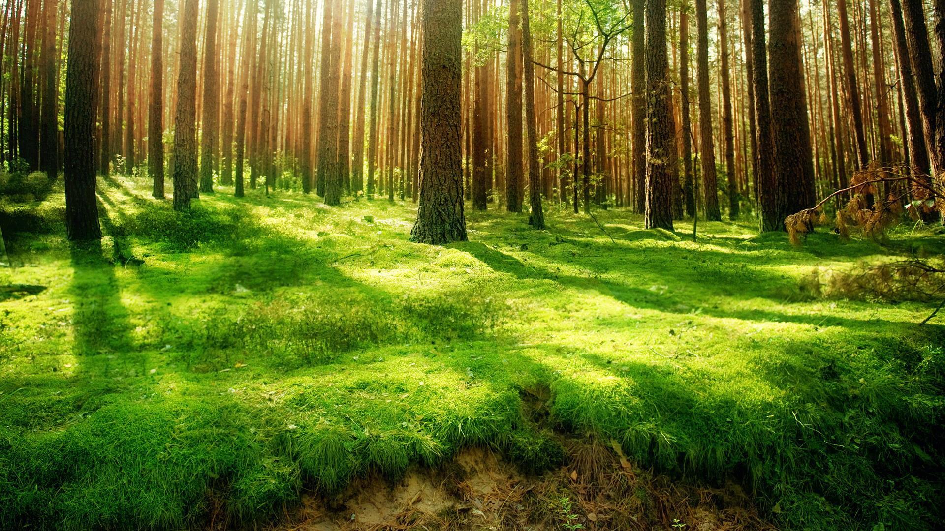 森林火灾与月份之间的关系