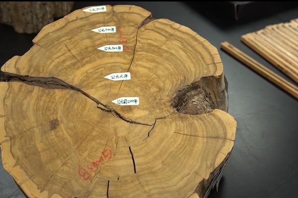 树木年轮在全球变化生态学中的应用