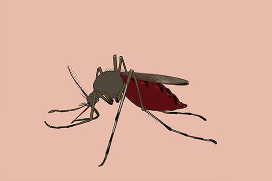 为什么蚊子总咬你?