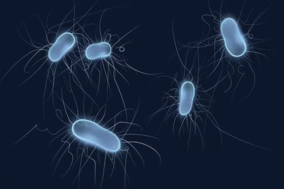 微生物需要的营养来源