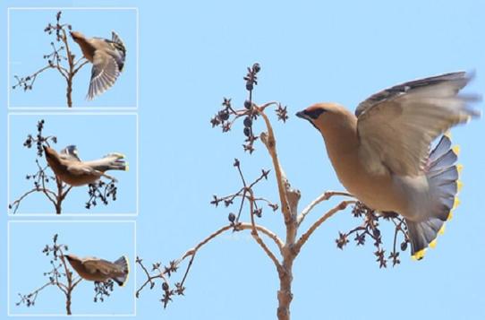 鳥類為什麼要在春季繁殖?