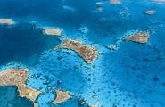 西沙群島發現新物種:羚羊礁海蝽