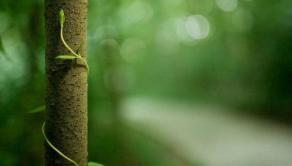 中國學者發現參與植物澀味化合物水解關鍵基因