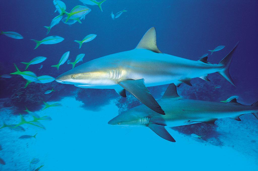 魚類物種數量越少 捕食者攻擊越頻繁