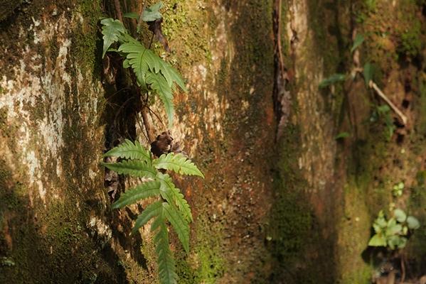 敬畏自然 和谐共生 走进植被与环境变化国家重点实验室
