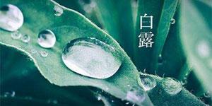 【傳統文化•二十四節氣】白露