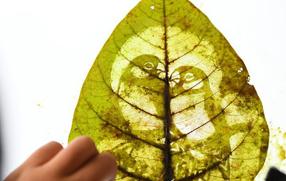 樹葉為原料的手工技藝