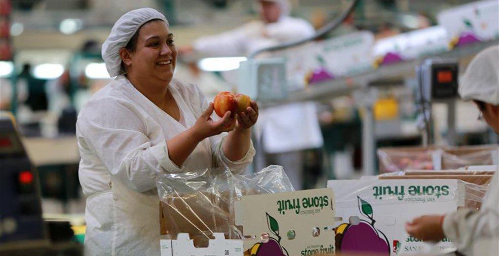 智利水果出口商的中國生意經