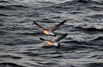 通訊:探秘北印度洋莫克蘭海溝
