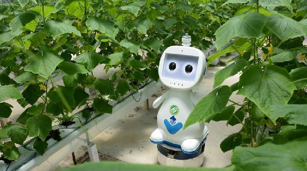 """邁向""""無人農場""""——福建發布人工智能農業機器人"""