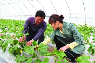 北京出臺政策鼓勵返鄉下鄉創業
