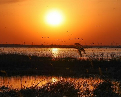 遼寧康平:臥龍湖濕地迎來大批候鳥
