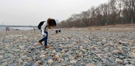 """蘭州:黃河""""露底""""引市民撿石散步(高清組圖)"""