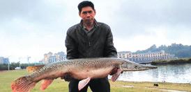 """男子在湖裏釣上90斤""""淡水魚殺手"""" 含有劇毒"""