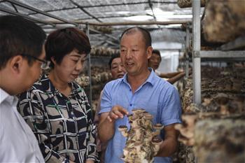 【高清图集】秦岭小镇特色农业 铺就家门口致富路