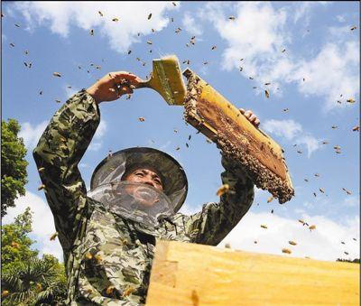 采割夏至蜜 酿造好日子