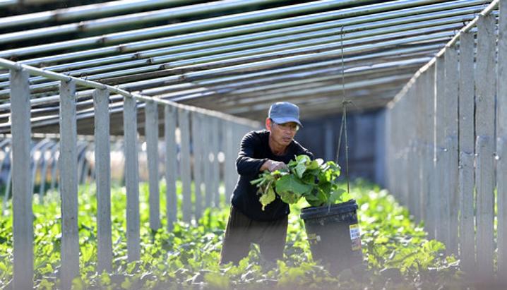 """因地制宜掘""""黃金"""" ——全國特色農業快速發展為農民增收闖出新路"""
