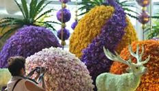 曼谷舉行蘭花展
