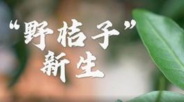 """""""野桔子""""新生"""