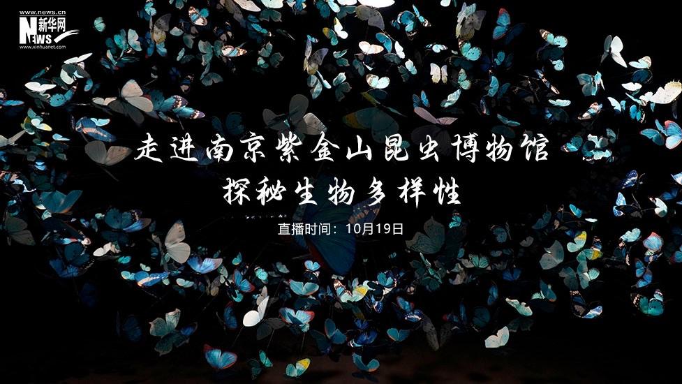 走進南京紫金山昆蟲博物館 探秘生物多樣性