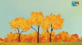 秋季草木幹,防火要當先!