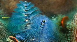 帶你走進珊瑚世界