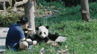 大熊貓和奶爸的下午茶時光