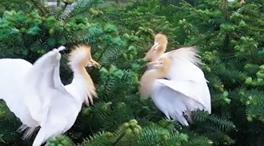 鷺鳥舞金秋