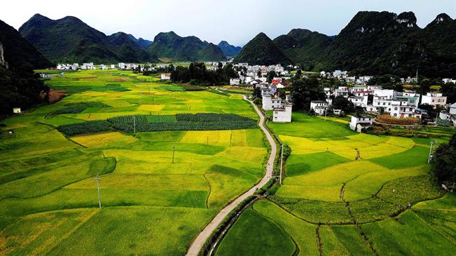生態優勢金不換——一幅鋪滿壯鄉大地的生態畫卷