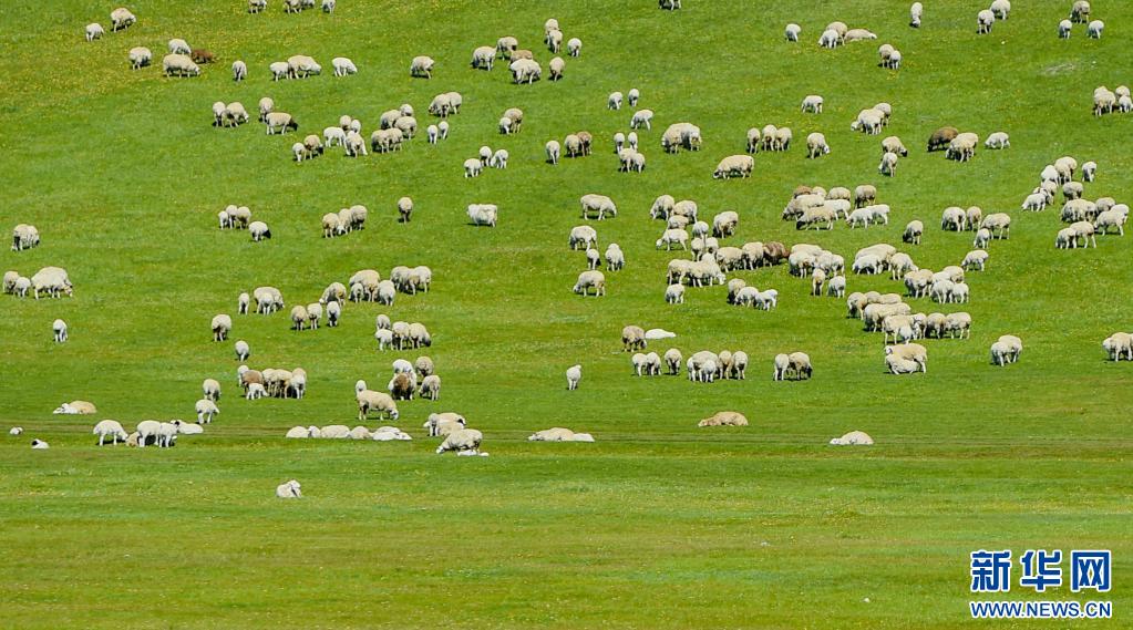 呼伦贝尔草原披绿装-新华网
