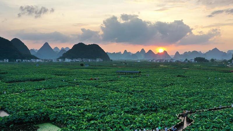 廣西柳州:萬畝荷塘迎客來