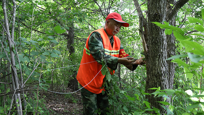 【短視頻】護林員巡山護林 用綠色反哺大山
