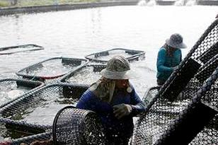 臺漁民:兩岸一家親 魚銷大陸提振漁民收入