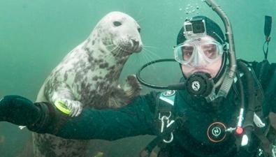 小海豹與潛水員合影
