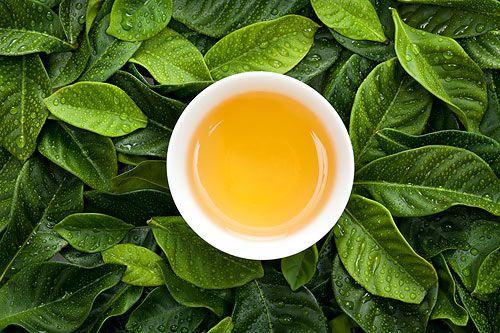 茶安全• 追蹤茶葉農殘問題真相