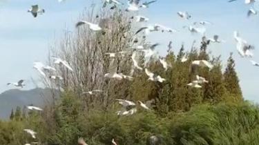 遊客暴力觀鷗被罰款