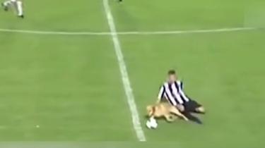 狗狗闖進球場 成功搶球