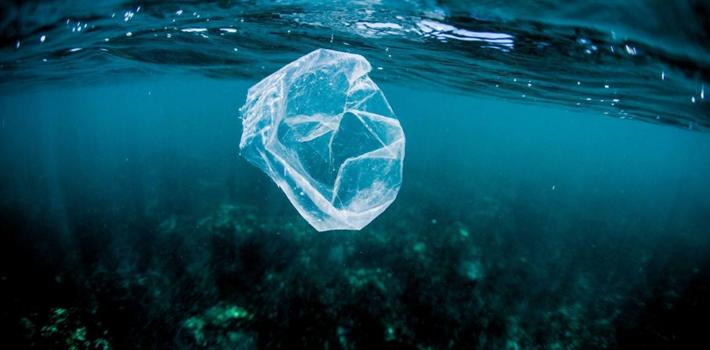 海洋污染 1萬米深海生物竟以塑料為食